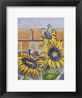 Framed House Sparows with Sunflowers