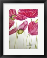 Framed Pink Poppies