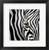 Framed Zebra Face