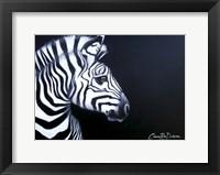 Framed Zebra On Black