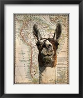 Framed South America Llama Map