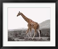 Framed Pop of Color Lone Giraffe
