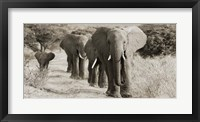 Framed Herd of African Elephants, Kenya