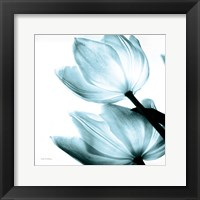 Framed Translucent Tulips II Sq Aqua