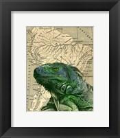 Framed Brazilian Iguana