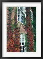 Framed Hanover Ivy on Dartmouth College Building, New Hampshire