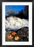Framed Maple Leaves and Wadleigh Falls on the Lamprey River, New Hampshire