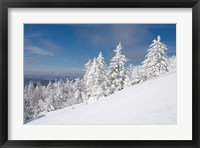 Framed Snowy Trees on the Slopes of Mount Cardigan, Canaan, New Hampshire