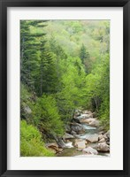Framed Spring on the Pemigewasset River, Flume Gorge, Franconia Notch State Park, New Hampshire