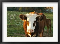 Framed New Hampshire, Farm Animal, Autumn