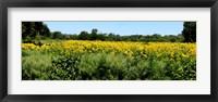 Framed Abshire Prairie, Indiana