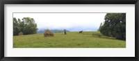 Framed Horse in a Field, Transylvania, Romania