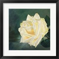 Framed Rose is a Rose 1