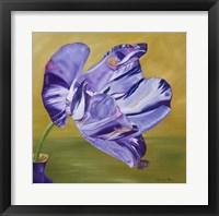 Framed Blue Lady Virus Tulip