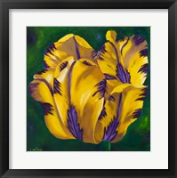 Framed Yellow Virus Tulip