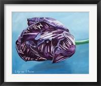 Framed English Society Tulip