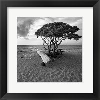 Framed Hawaiian Tree