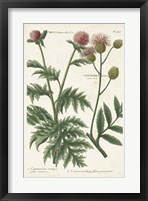 Framed Botanical Varieties III