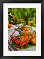 Framed Lobster, Fiji