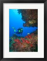 Framed Diver, Coral-lined Arc, Beqa Island, Fiji
