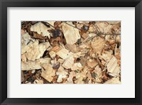 Framed Wood Chips on a TPL Property, Goshen, Connecticut