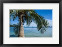 Framed Palm tree over clear waters around Nanuya Lailai Island, Blue Lagoon, Yasawa, Fiji, South Pacific