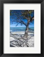 Framed Hammock on the beach of a resort, Nacula Island, Yasawa, Fiji, South Pacific