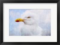 Framed Seagull