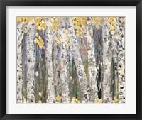 Framed Yellow Leaf Birch Trees