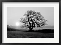 Framed Tree On Fields