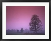 Framed Evening Fields