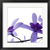 Framed Purple Blossom 2