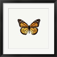 Framed Yellow Butterfly 1