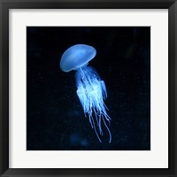 Framed Jellyfish