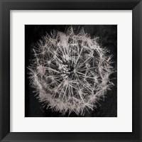 Framed Rich Silver Dandelion