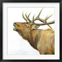 Framed Majestic Elk Brown Crop