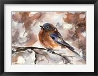 Framed Robin on Branch