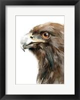 Framed Bird of Prey