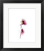 Framed Pink Pansy