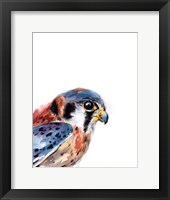 Framed Bird of Prey II