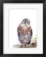 Framed Bird of Prey III