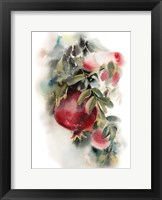 Framed Pomegranate