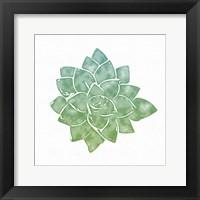 Framed Green Succulent