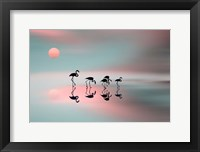 Framed Family Flamingos