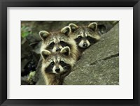 Framed Tres Banditos
