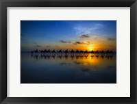 Framed Sunset Camel Ride