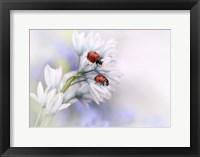 Framed Ladybirds