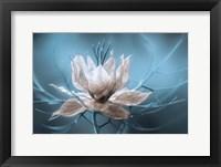 Framed Nigella