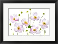 Framed Japanese Anemones
