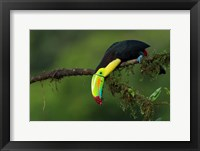 Framed Colors Of Costa Rica